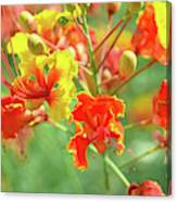 Colorful Morning Canvas Print