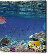 Colorful Reef Underwater Landscape With Canvas Print