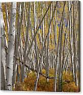 Colorful Stick Forest Canvas Print