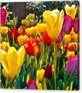 Colorful Tulips In The Park. Spring Canvas Print