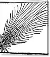 Comet Of 684 Halley, 1493 Canvas Print