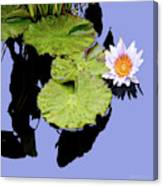 Composition with Water Lily Canvas Print