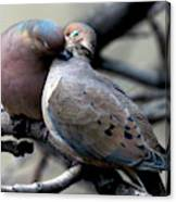 Cooing Mourning Doves 2 Canvas Print