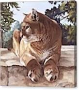 Cougar Outlook Canvas Print