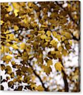Cozy Fall Day Canvas Print