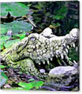 Crocodile Profile. Canvas Print