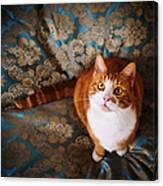 Cute Cat Named Nisse Canvas Print