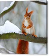 Cute Red Squirrel In Winter Scene With Canvas Print