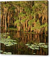 Cypress In The Lake Canvas Print