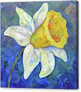 Daffodil Festival I Canvas Print