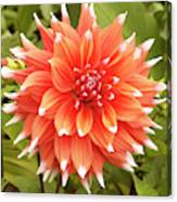 Dahlia Bloom Flower Canvas Print