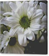 Daisey Flowers 0981 Canvas Print