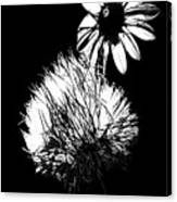 Daisy And Thistle Black And White Canvas Print