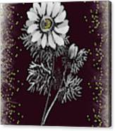 Daisy Sparkle Canvas Print