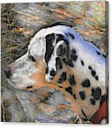 Dalmatian Dog Canvas Print