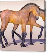 Darling Foal Pair Canvas Print