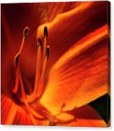 Day Lily Delight Canvas Print