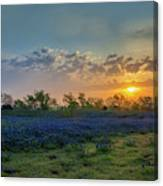 Daybreak In The Land Of Bluebonnets Canvas Print
