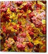 Days Of Autumn 18 Canvas Print