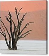 Dead Vlei Sossusvlei Africa Namibia Canvas Print