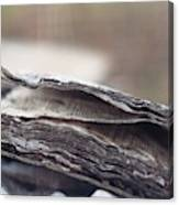 Decaying Book  Canvas Print