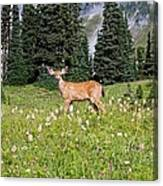 Deer Cervidae In Paradise Park In Mt Canvas Print
