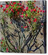 della Rocca Rose Canvas Print