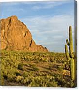 Desert Mountain Cactus Classic Canvas Print