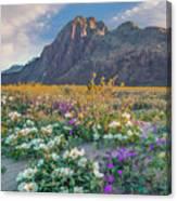 Desert Sand Verbena, Desert Sunflower Canvas Print