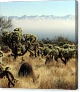 Desert Winter 1 Canvas Print