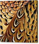 Detail Of Pheasant Feathers Canvas Print