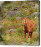 Digital Watercolor Painting Of Stunning Image Of Wild Pony In Sn Canvas Print