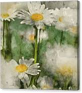 Digital Watercolor Painting Of Wild Daisy Flowers In Wildflower  Canvas Print
