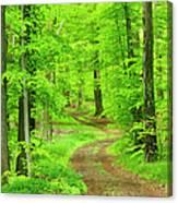 Dirt Road Through Lush Beech Tree Canvas Print