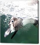Dive Penguin Dive Canvas Print