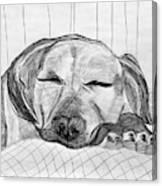Django Napping Canvas Print