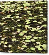 Dnrs1007 Canvas Print