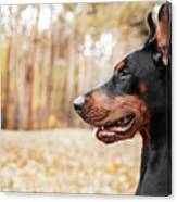 Doberman Pinscher On The Background Of Canvas Print