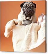 Dog In Basket Canvas Print