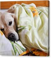 Dog Sleeps Under The Blanket Canvas Print