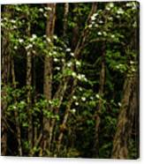 Dogwood Tree 2 Canvas Print