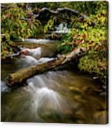 Dogwoods Along The Provo Deer Creek Canvas Print