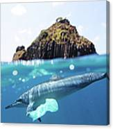 Dolphin And Plastic Bag Canvas Print