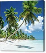 Dominican Republic, Saona Island, Palm Canvas Print