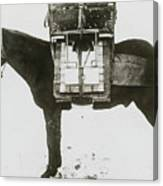Donkey Carrying Portable Telegraph Canvas Print