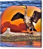 Double Crested Cormorant    Drying Wings         September        Indiana Canvas Print