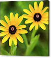 Double Daisies Canvas Print