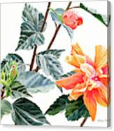 Double Orange Hibiscus With Buds Canvas Print