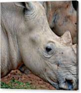 Double Rhino Canvas Print