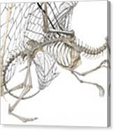 Dragon Skeleton  Canvas Print
